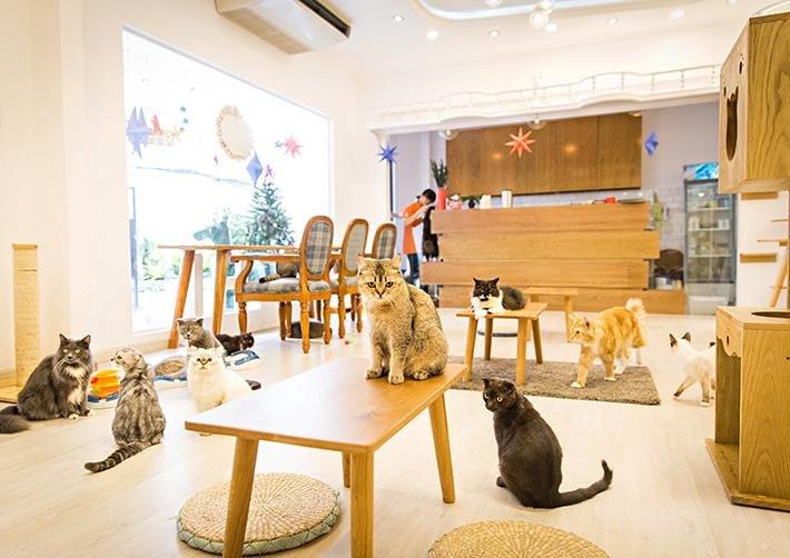 ý tưởng thiết kế quán cafe 16